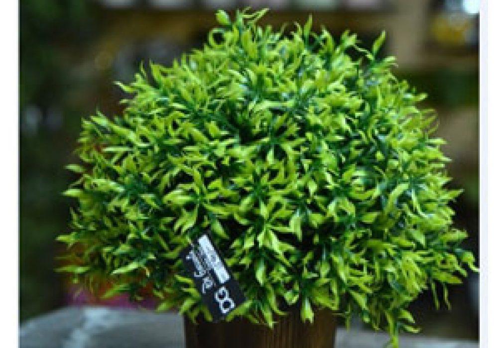 Topiary-plant