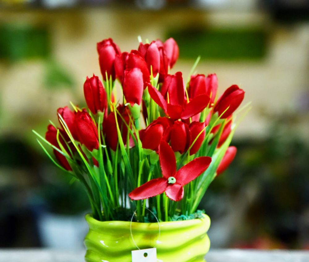 Tulip potted plant