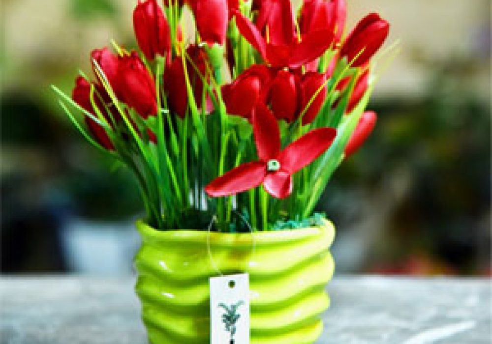 Tulip-potted-plant(300×300)