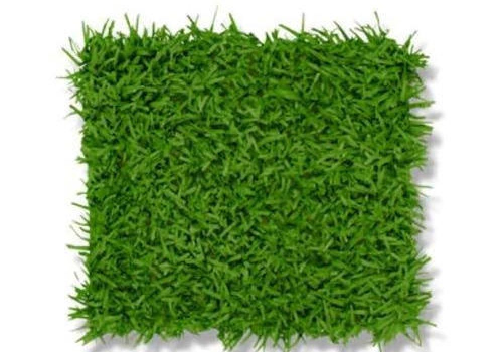 green-grass-mat-500×500