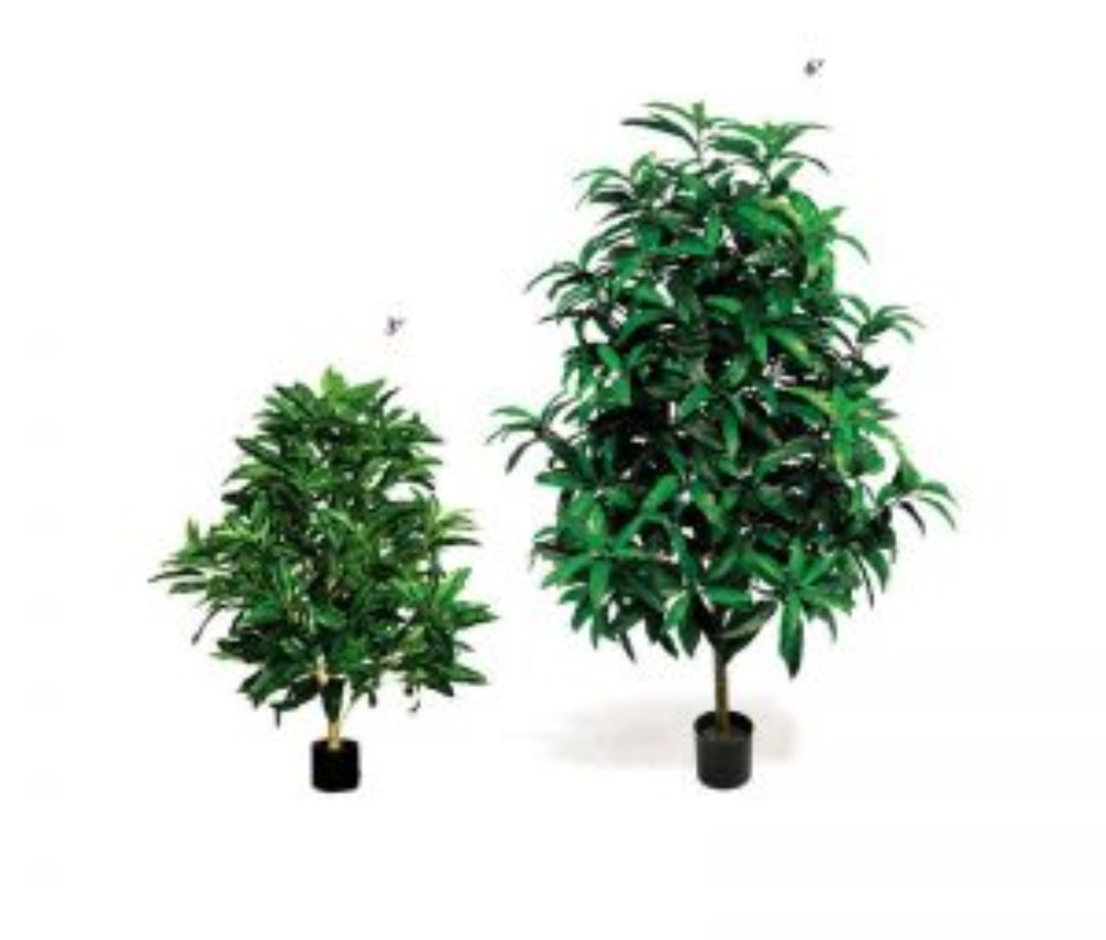 potted-mango-plant-2-sizes-15